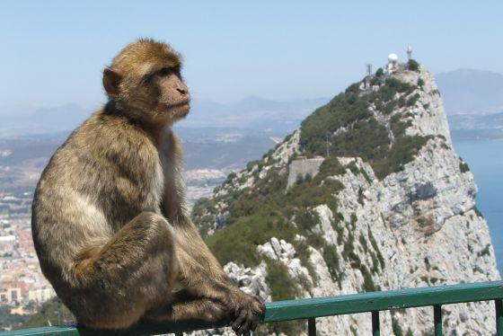 Daytrip6_Gibraltar